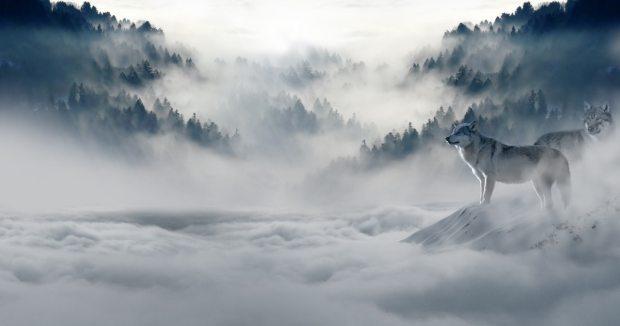 fog-foggy-hazy-89773